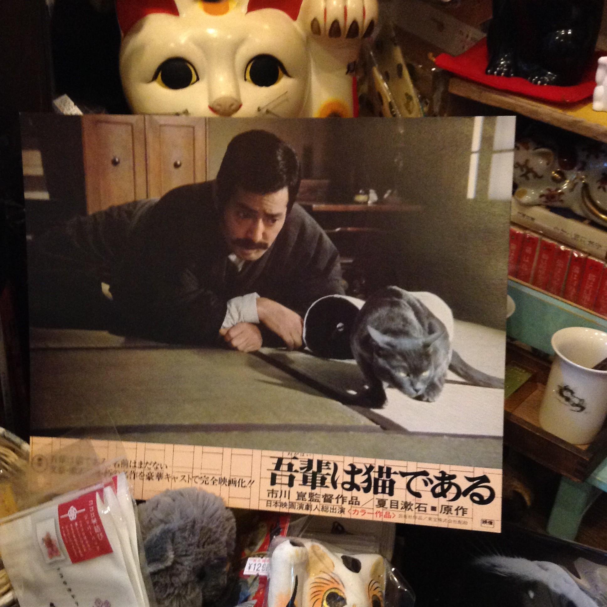 吾輩と、猫である⑤ - 賽助之間 - d.hatena.ne.jp